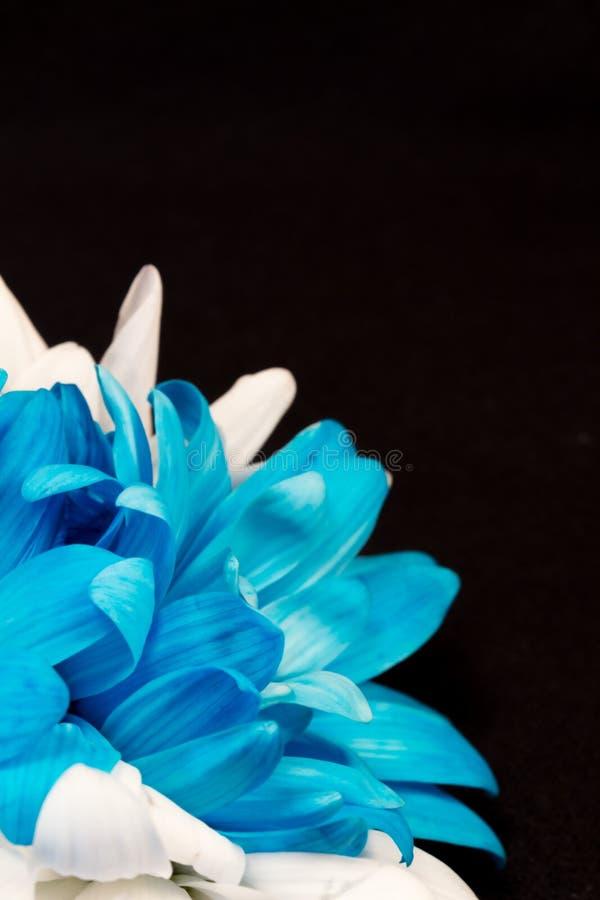 Het gluren Bloemblaadjes stock foto's