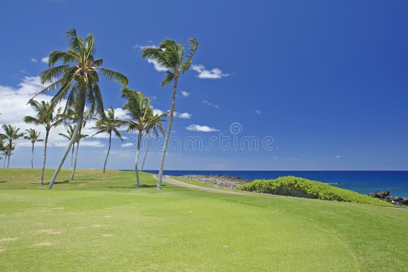 Het golfcursus van Hawaï royalty-vrije stock foto's