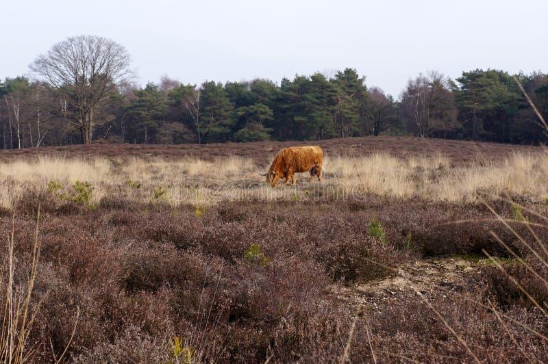 Het Gooi, Holenderski rezerwat przyrody obraz stock