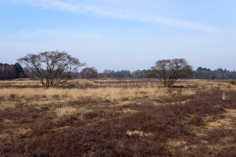 Het Gooi, Holenderski rezerwat przyrody fotografia royalty free