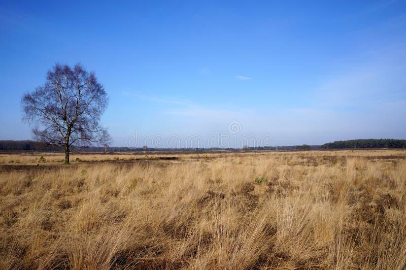 Het Gooi, Holenderski rezerwat przyrody obrazy stock
