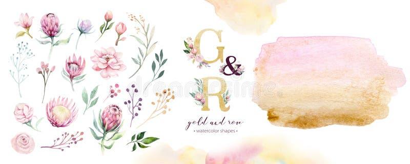 Het goud en nam van de waterverf acrylverf vorm als achtergrond toe Abstracte gouden de inktverf van de kunstborstel op wit Decor vector illustratie