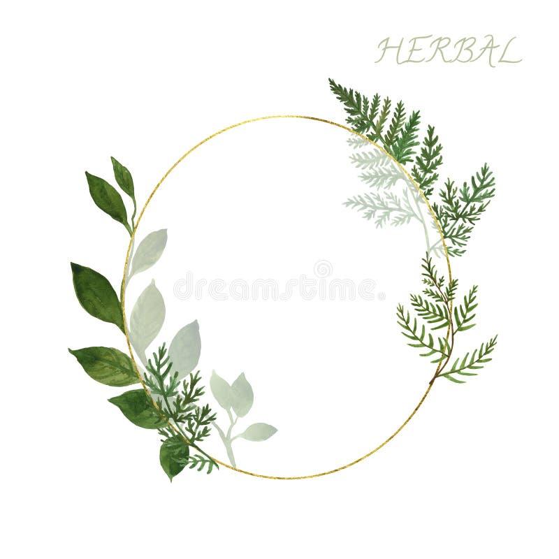 Het gouden kader van de Botanicswaterverf met wilde kruiden en groene bladeren op witte achtergrond Het ontwerpmalplaatje van de  vector illustratie
