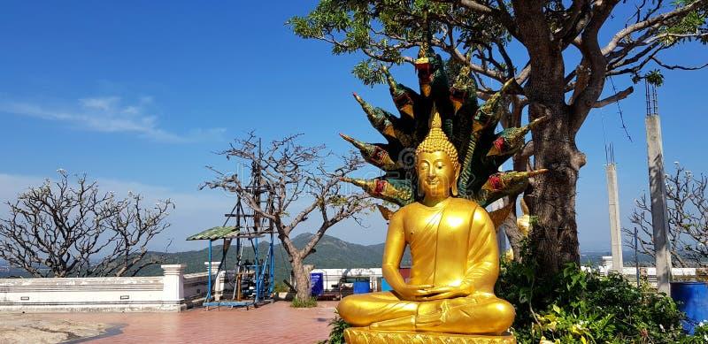 Het gouden standbeeld van Boedha met groene boom en blauwe hemelachtergrond bij Thaise tempel stock fotografie