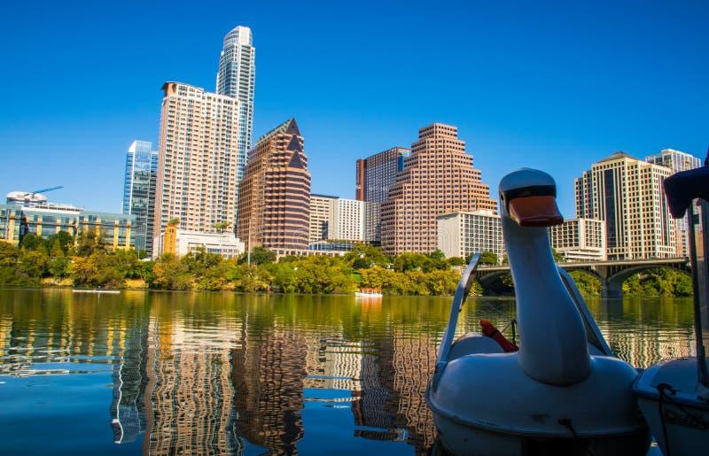 Het Gouden Uur van Austin Texas Downtown Skyline Reflection Sunset met Zwaan die op Stadsmeer drijven stock afbeeldingen