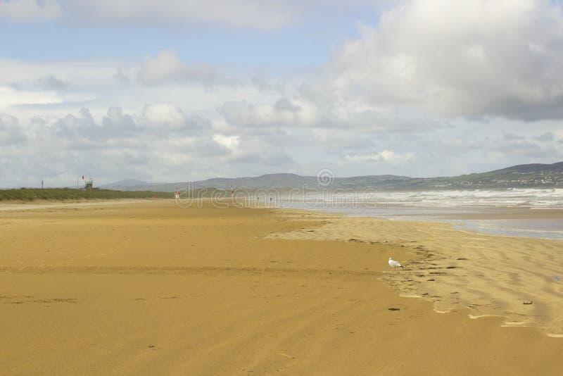 Het gouden zand van het verlaten strand in Benone in Provincie Londonderry op de het Noordenkust van Ierland stock foto's