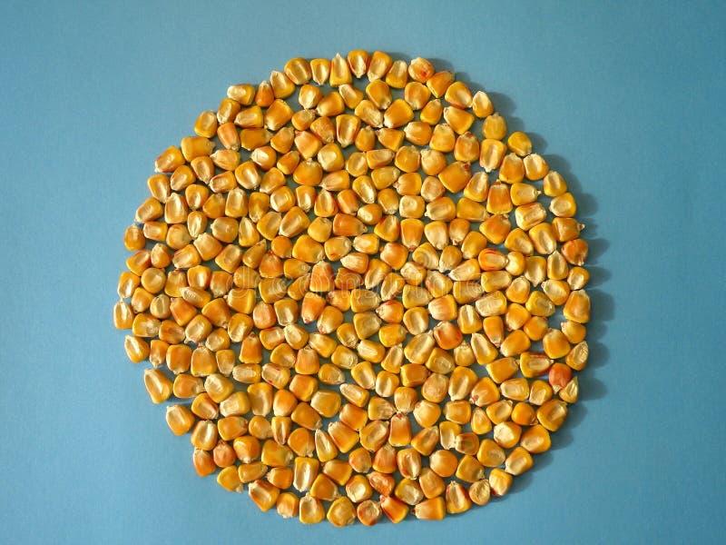 Het graan van de maïs stock afbeelding