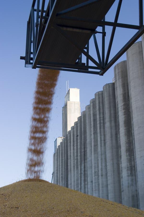 Het graan van het surplus bij de silo royalty-vrije stock foto