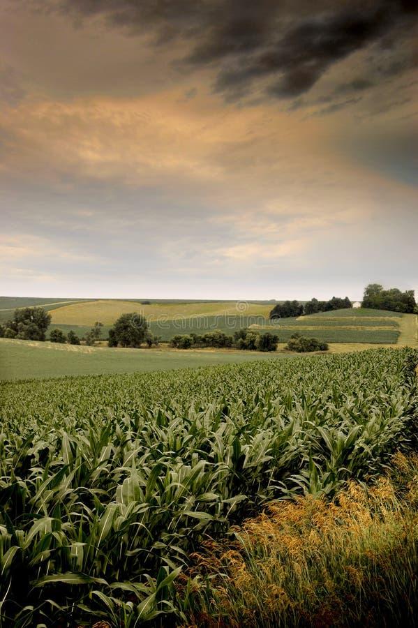 Het graan van Iowa stock fotografie