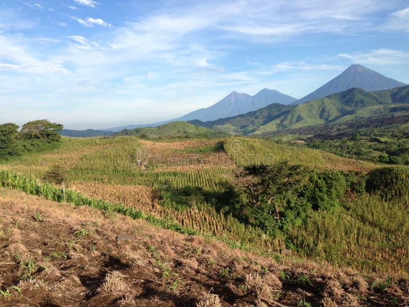 Het graangebied van Guatemala stock afbeelding