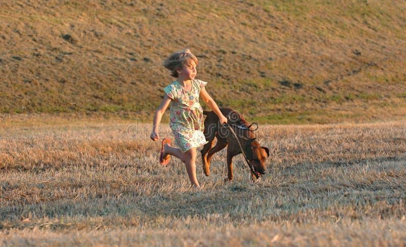 Het grappige honden lopen royalty-vrije stock fotografie