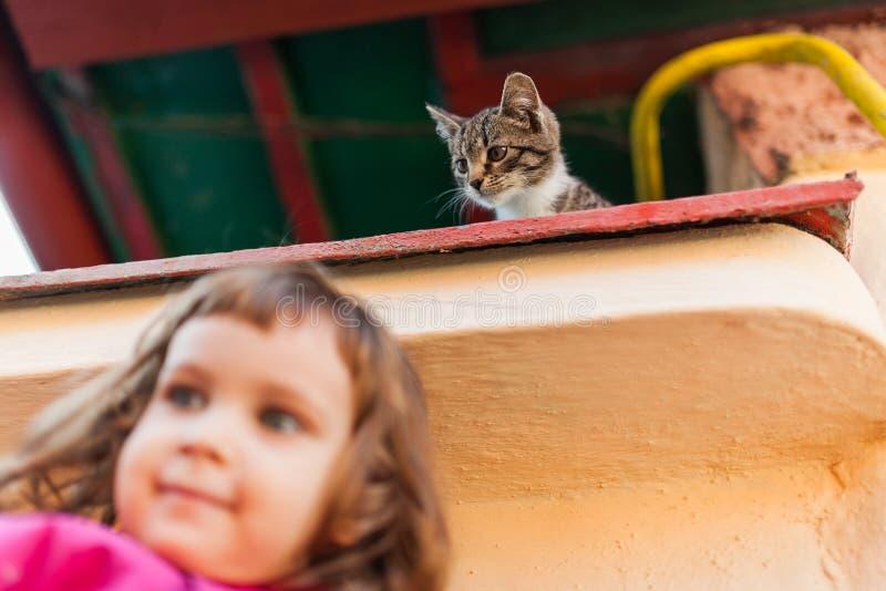 Het grappige katje letten op van hierboven royalty-vrije stock foto's