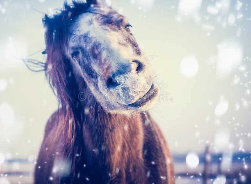 Het grappige Paard geniet van de winter en de sneeuw, sluit omhoog stock afbeeldingen