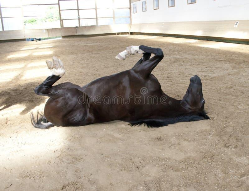 Het grappige Paard ligt op de rug royalty-vrije stock afbeelding