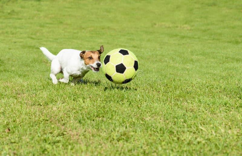 Het grappige voetbalster spelen met een voetbalbal bij achtertuin stock afbeeldingen