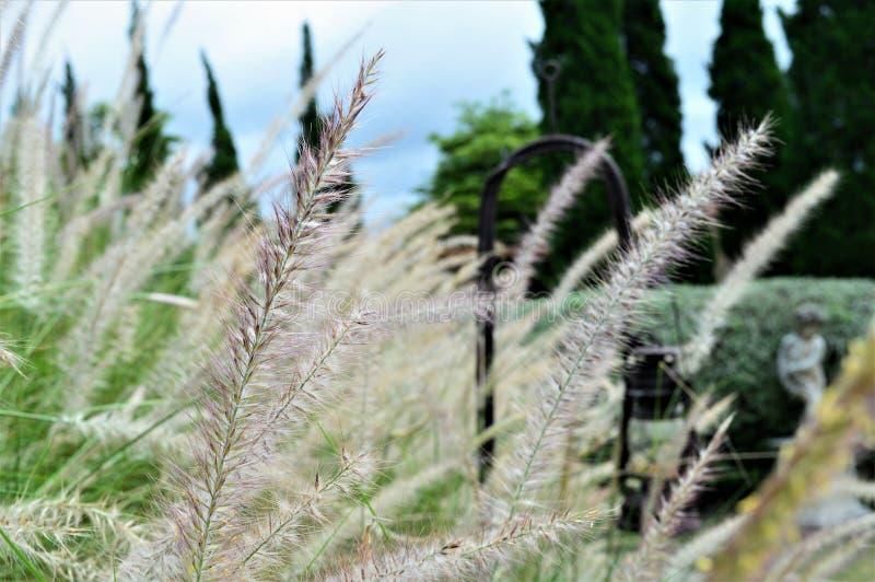 Het gras royalty-vrije stock foto's