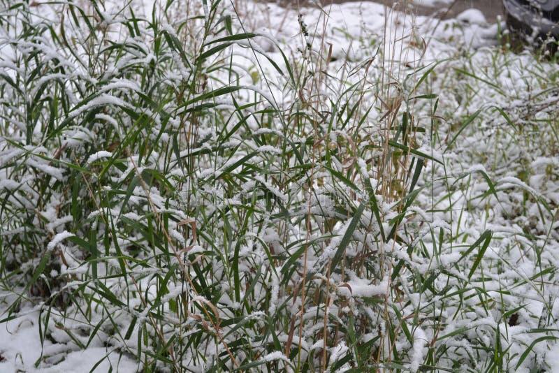Het gras is behandeld met sneeuw stock foto