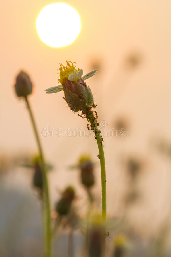 Het gras bloeit selectieve nadruk met ondiepe diepte van gebied stock afbeelding