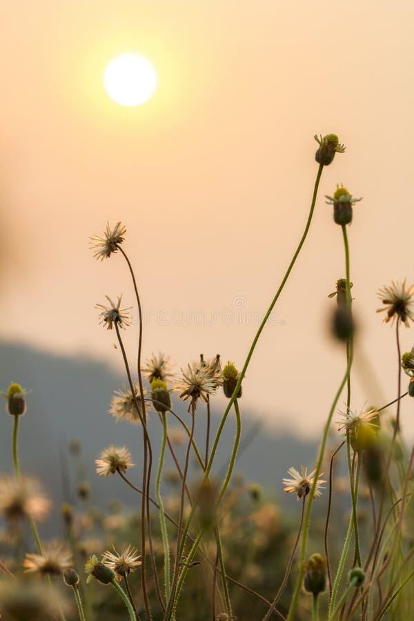 Het gras bloeit selectieve nadruk met ondiepe diepte van gebied stock foto