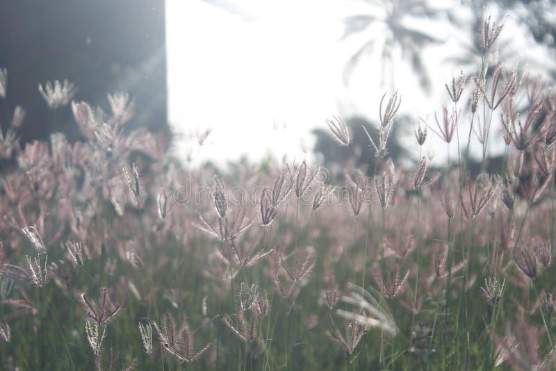 Het gras in de middag royalty-vrije stock foto's