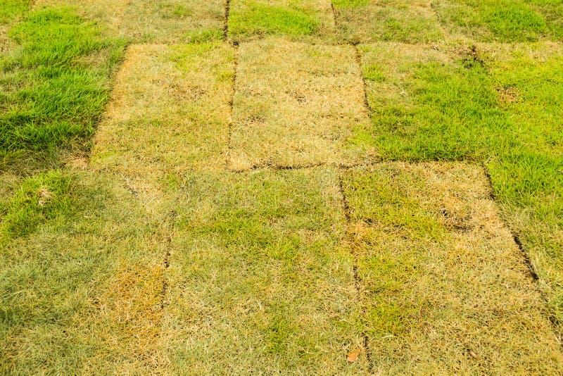 Het gras in de tuin stock foto's