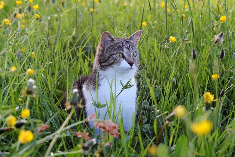 In het gras die muizen vangen royalty-vrije stock foto