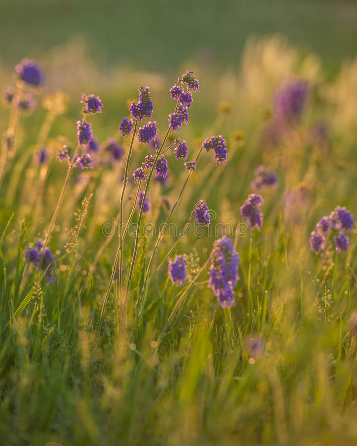 Het gras en de bloemen van de lente stock fotografie