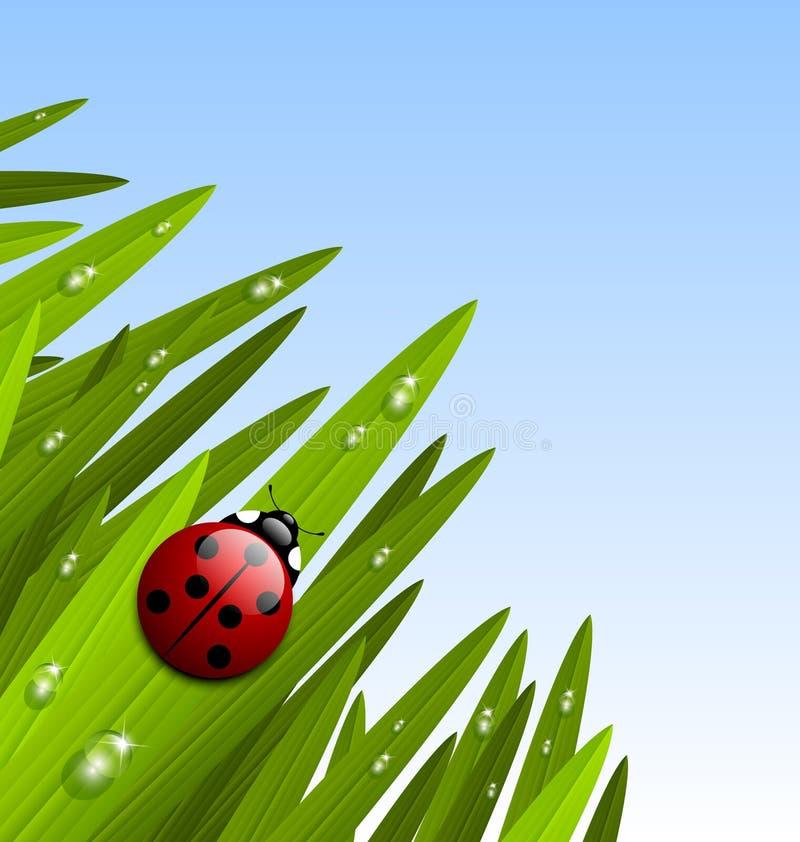 Het gras en het lieveheersbeestje van de ochtend vector illustratie