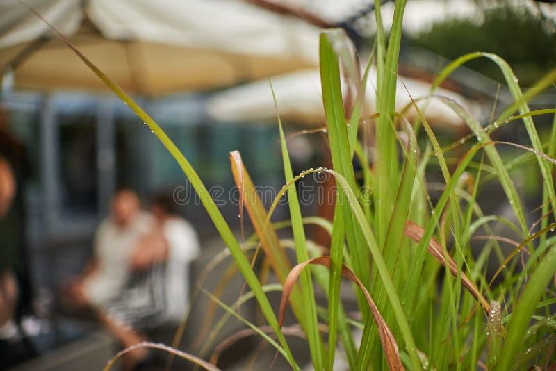Het gras heeft een daling van water royalty-vrije stock afbeelding