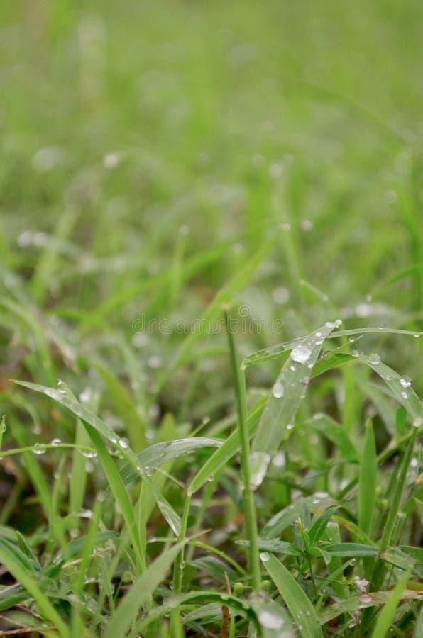 Het Gras op de Regen stock foto