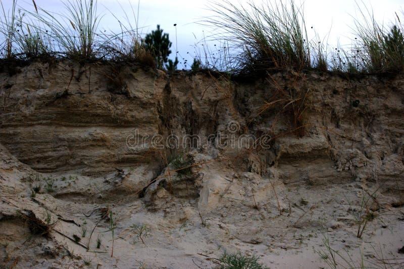 Het gras op het strand royalty-vrije stock foto