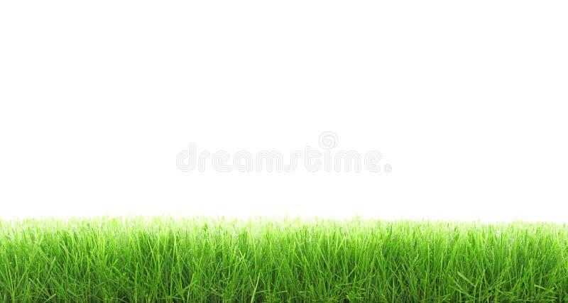Het gras van de besnoeiing royalty-vrije stock afbeelding