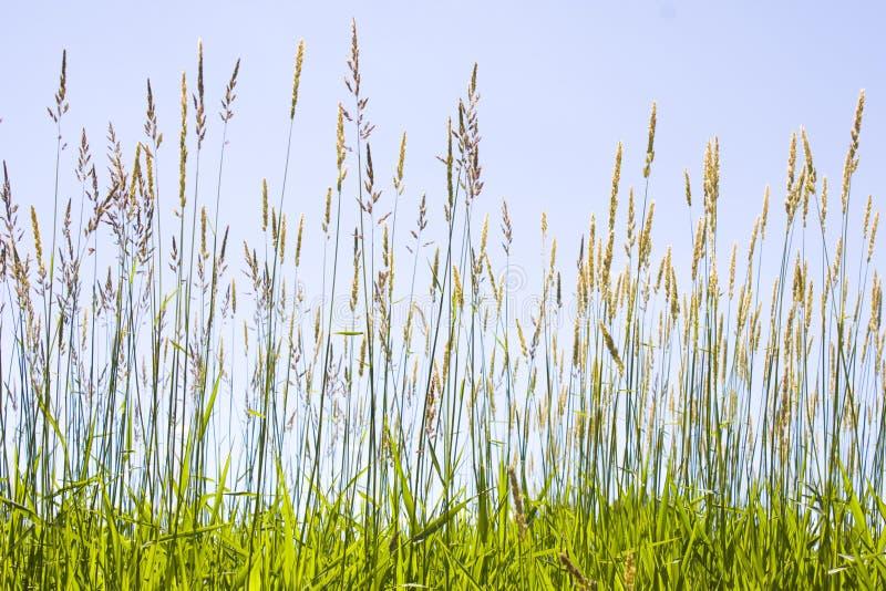 Het Gras van de prairie stock afbeeldingen