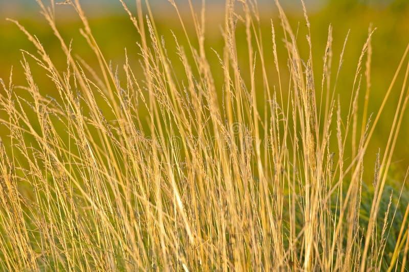 Het Gras van de prairie royalty-vrije stock foto's