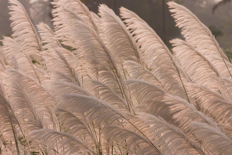 Het Gras van de prairie royalty-vrije stock fotografie