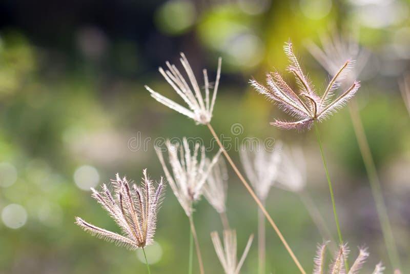 Het gras van de prairie royalty-vrije stock afbeelding