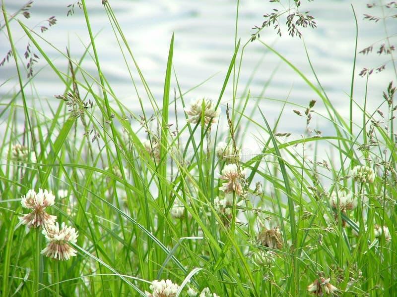 Het gras van de weide stock afbeeldingen