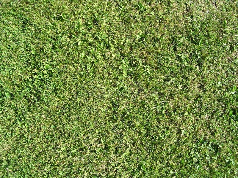 Het Gras van de zomer