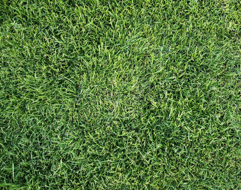 Het gras van de zomer. stock foto's