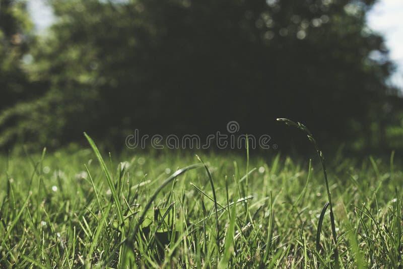 Het gras van de zomer stock fotografie