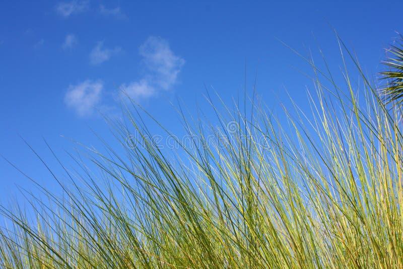 Het gras van Everglades tegen blauwe hemel royalty-vrije stock afbeeldingen
