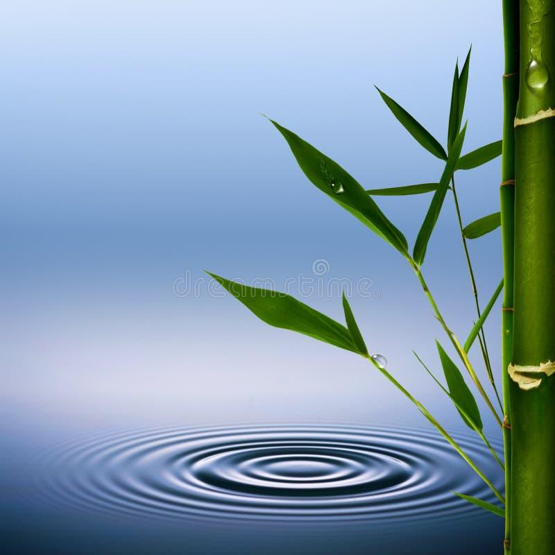 Bamboe. stock illustratie