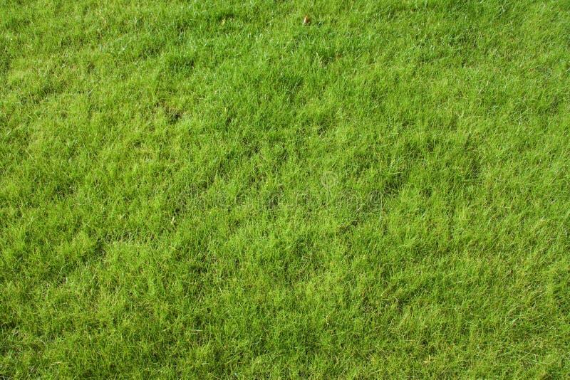 Het gras van het gazon royalty-vrije stock foto's