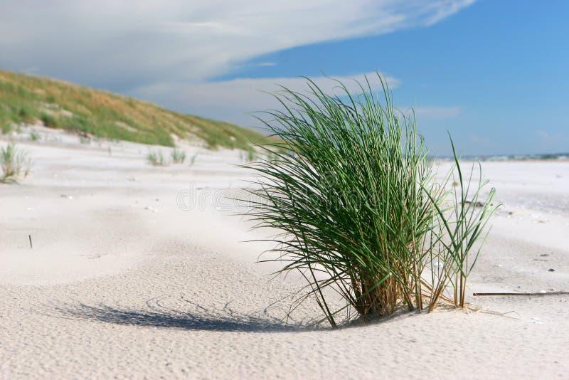 Het gras van het strand stock afbeelding