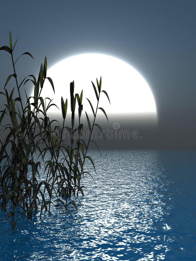 Het Gras van het water royalty-vrije illustratie