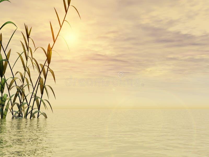 Het Gras van het water