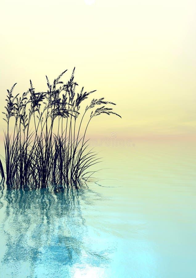 Het Gras van het water stock illustratie