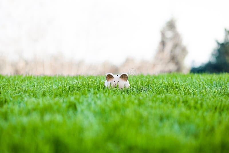Het gras van het spaarvarken openlucht royalty-vrije stock foto's
