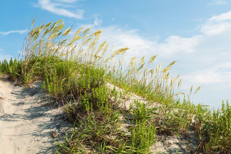 Het grasrijke Zandduin op Coquina-Strand bij zeurt Hoofd royalty-vrije stock fotografie