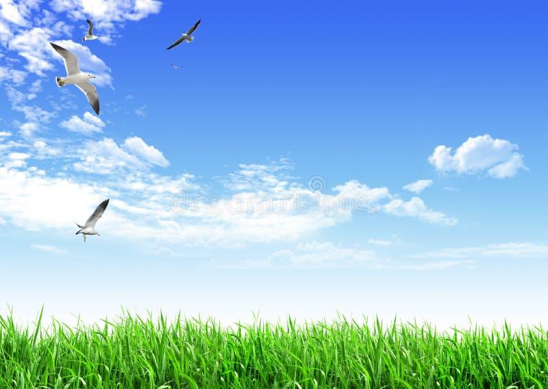 Het grasvogel van de hemel royalty-vrije stock afbeelding